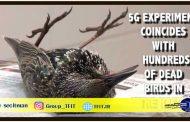 اخبار فناوری | آزمایش اینترنت پرسرعت 5G در هلند جان صدها پرنده را گرفت